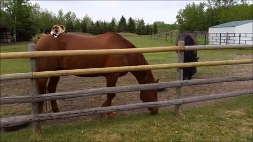 草を食べ始める馬と困惑する猫