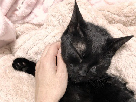 飼い主に撫でられている黒猫