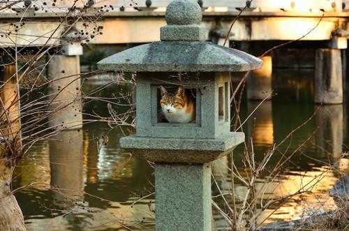 石で作られた置物の中でくつろぐ猫