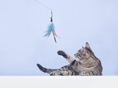 釣り竿タイプのおもちゃで遊ぶ猫