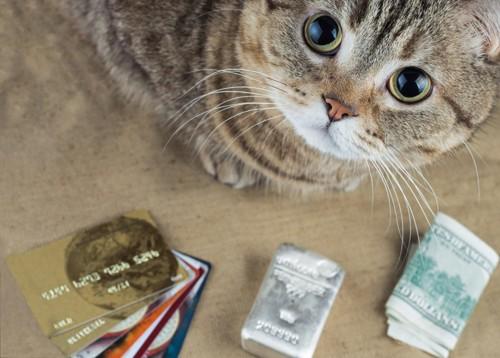 買ってにゃとカードなどを並べる猫