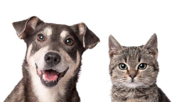 並ぶ猫と犬
