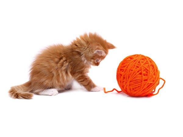 毛糸に反応する子猫