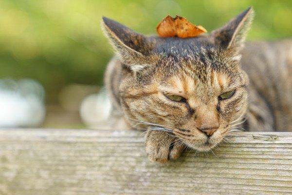 落ち葉が頭に乗った猫