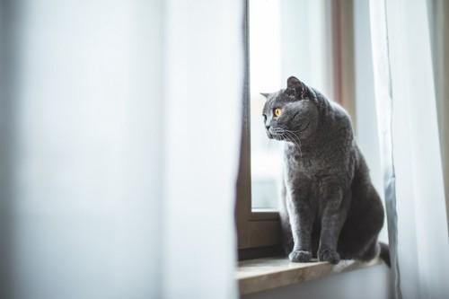 窓辺に座って外を眺めている猫