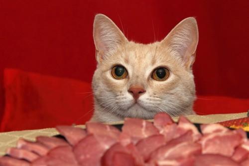 ローストビーフと猫