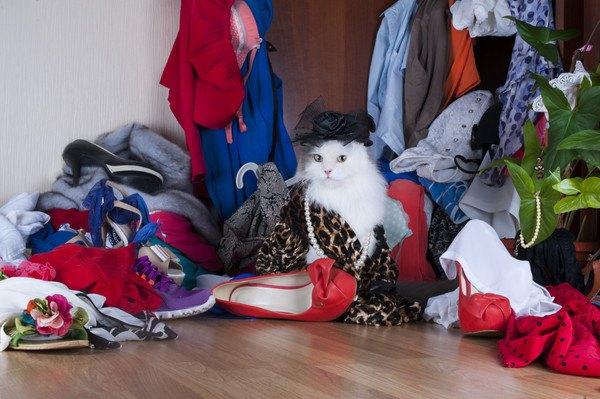 衣服が散らかった部屋にいる白い猫