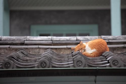 屋根の上で眠る猫
