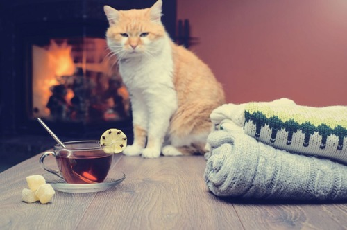 猫と紅茶とセーター