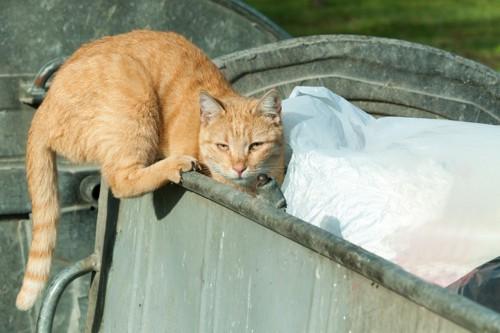 ごみ箱と猫