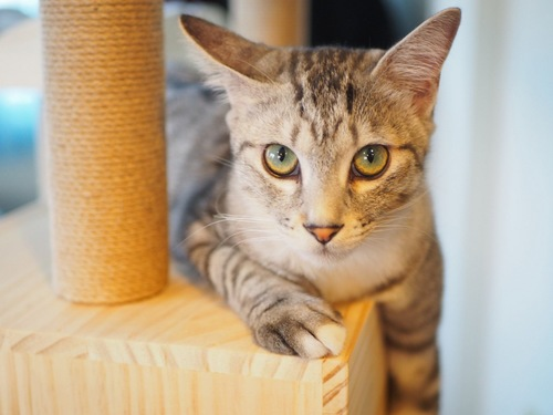 タワーでくつろぐ猫