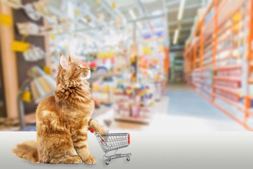 お店を背景に小さなカートを押す猫