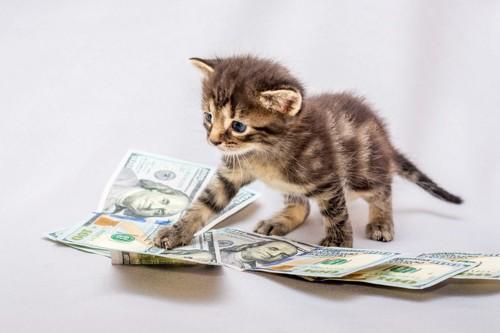 お金の上で遊ぶ子猫