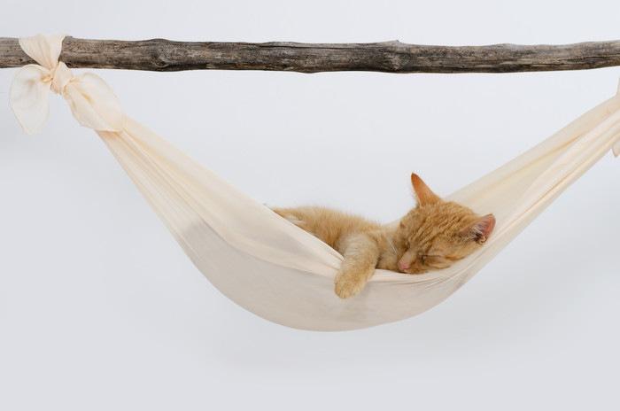 ハンモックで寝る茶トラ猫