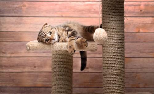ボーっとする猫