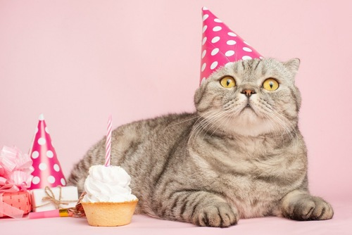 パーティー帽子をかぶった猫