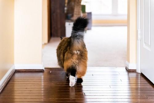 歩く猫の後ろ姿