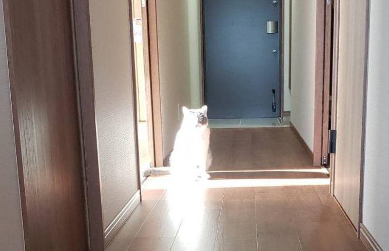 発行体になった猫