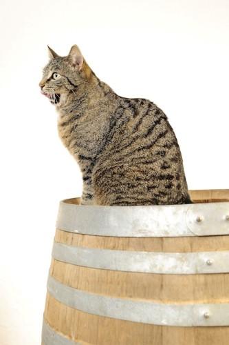 樽の上に座っているトラ猫