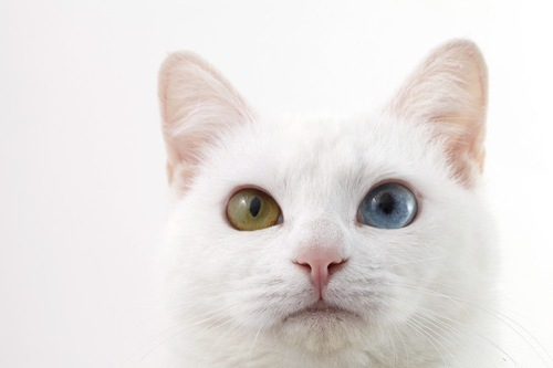 白猫アップ