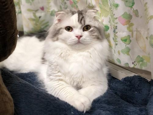 おりこうな猫