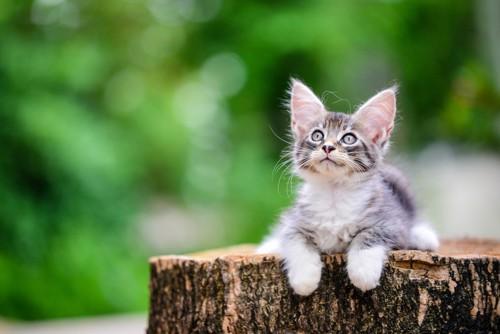 丸太の上に座る猫