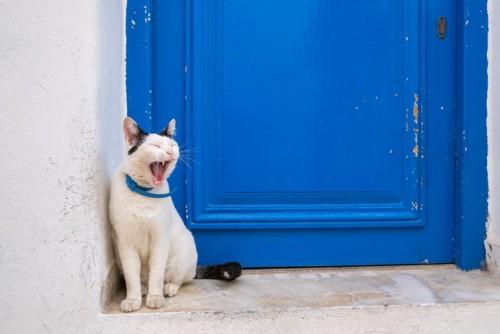 ドアの前であくびをする猫