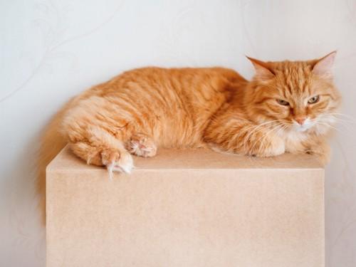 箱の上の猫