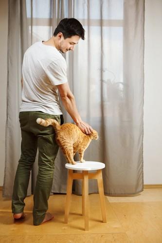 イスの上に立ってなでられる茶色の猫