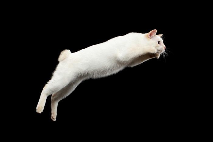 ジャンプする白猫