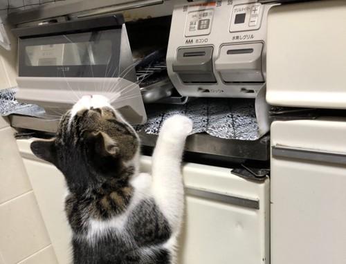 魚が焼けるのを待っている猫