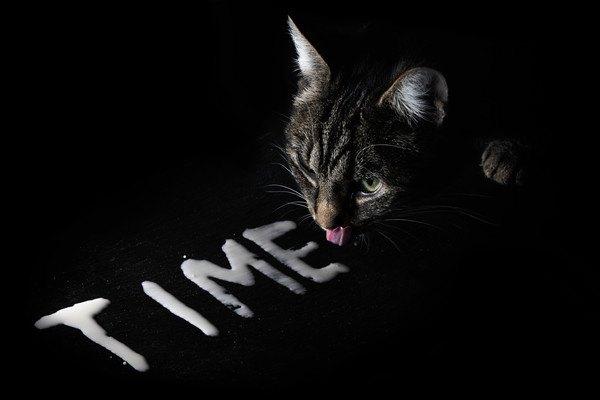 黒い背景の猫とTIME