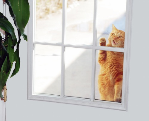 ドアの外から鳴く茶トラ