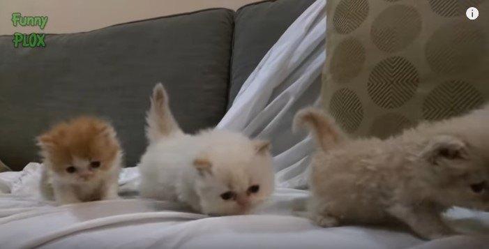 子猫の隊列