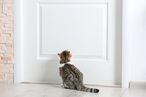 ドアの前に座っている猫の後ろ姿