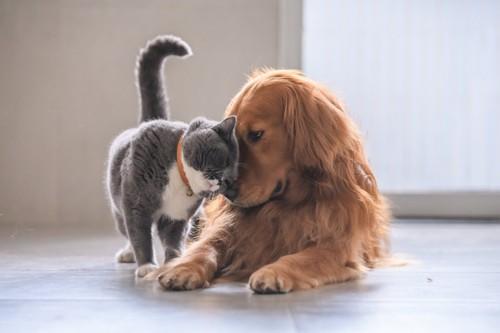 犬に頭をこすりつける猫