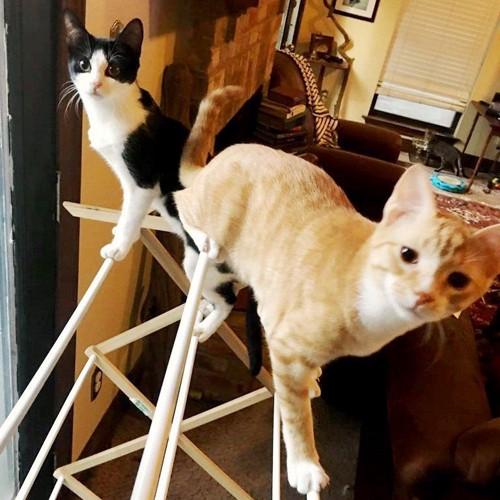 物干しざおの上で遊ぶ2匹の子猫