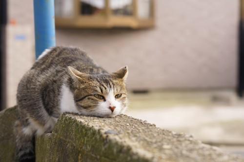 外で一休みする猫