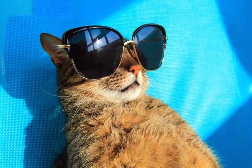 サングラスをかけて日差しを浴びる猫
