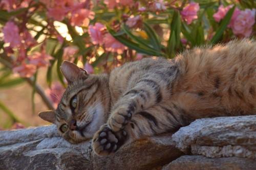 岩場で寛ぐ猫