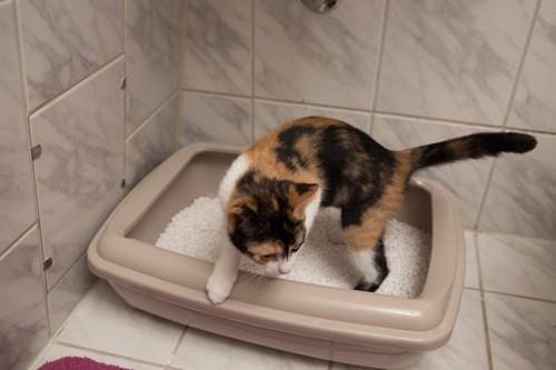 猫用のトイレに入っている猫