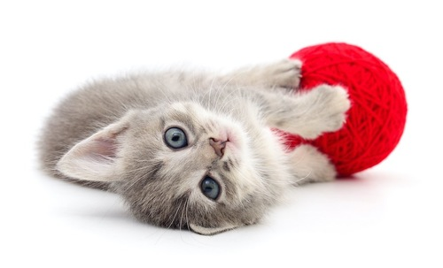 毛玉とこちらを見つめる子猫