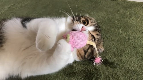 顔の上におもちゃが乗っている猫