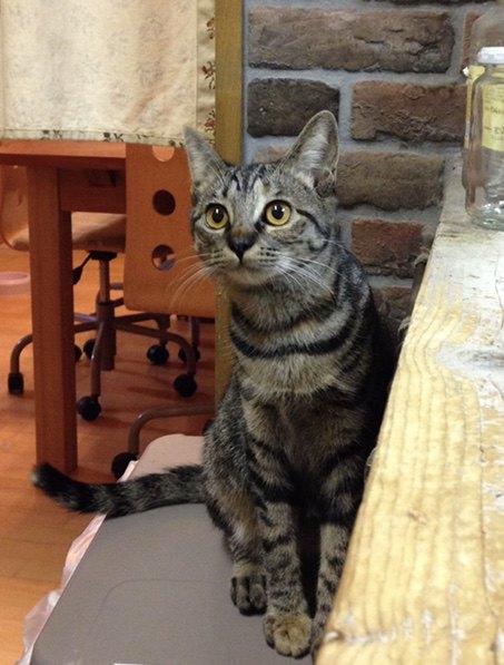 台所で見守る猫