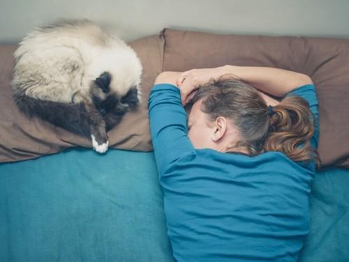 ベッドで寝る人と猫