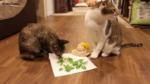 キャットニップと2匹の猫