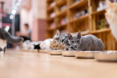 猫カフェのごはん風景
