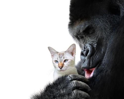 子猫を抱っこするゴリラ