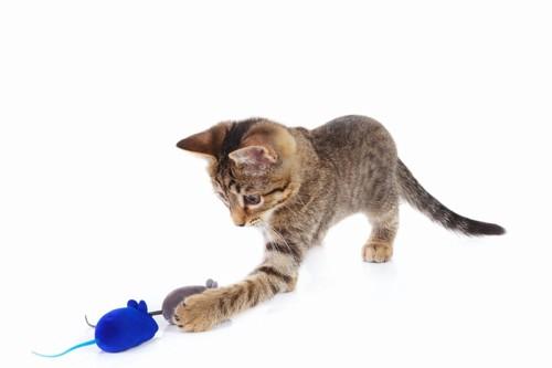 ねずみのおもちゃで遊んでいる猫