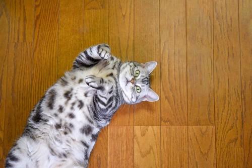 床の上で仰向けになりこちらを見上げる猫